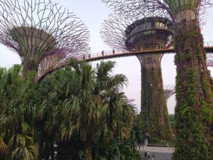 Сады у залива подвесной мост