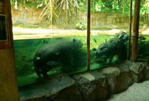 животные в зоопарке сингапура