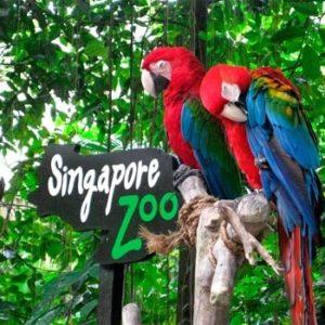 сингапур зоопарк