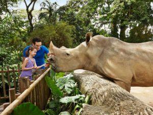 шоу в зоопарке