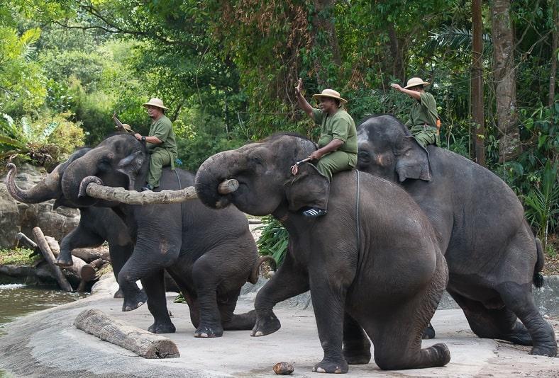 Шоу в зоопарке сингапура