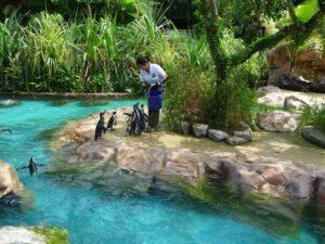 Кормление в парке птиц в Сингапуре