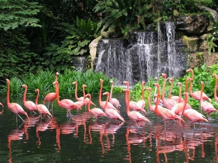 парк птиц цена билета