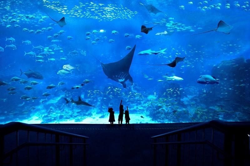 аквариум в сингапуре