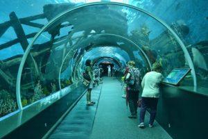 океанариум сингапуре s.e.a.