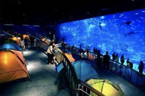 сентоза аквариум